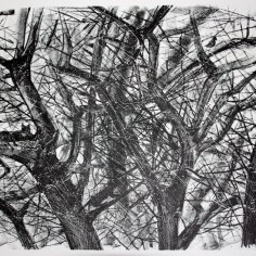 Kisa puussa, litografia, 2012